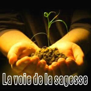 Thands_seedling